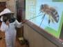 Včela je malý zázrak prírody